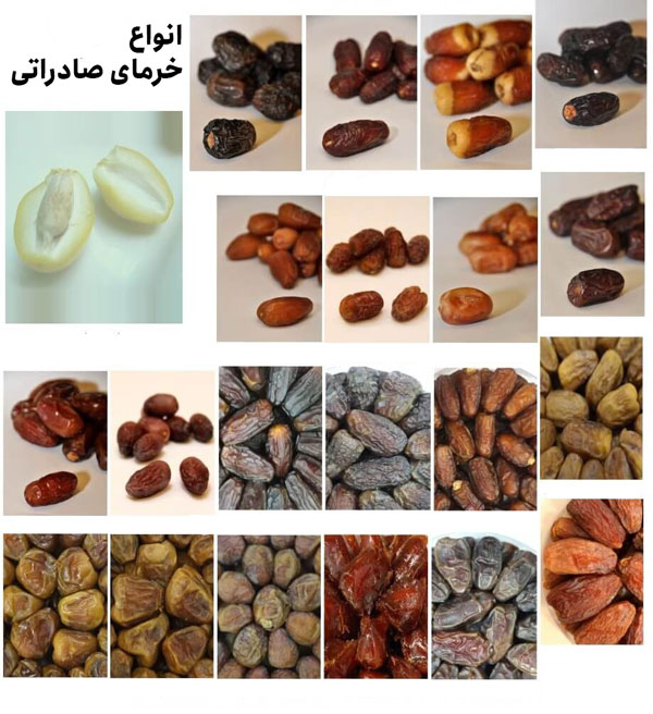 types of dates - exporting dates